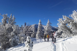 Guided Tahoe Snowshoe Tours